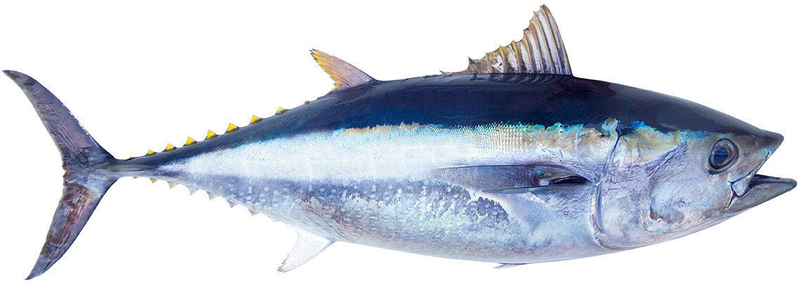 pescado de murcia