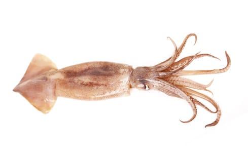 Calamar de murcia