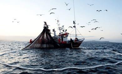 Arte de pesca cerco